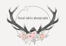 Pascal Iodice Photographe